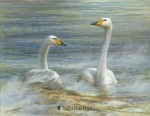 Twee wilde zwanen - Erik van Ommen - gicleekunst